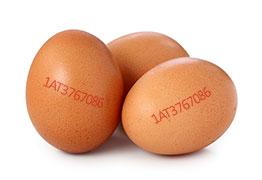 Was steht auf dem Ei?
